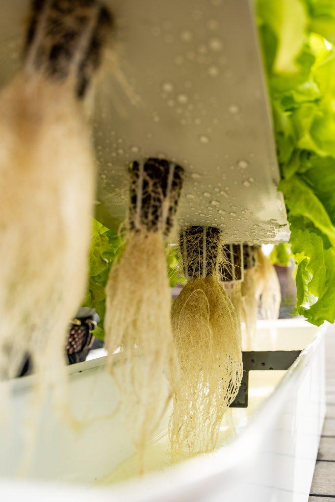 Hydroponisk dyrkning er en ny trend hvor man dyrker planter uten jord. Hageland Kilden har to utgaver med enten 3 eller 6 planter.
