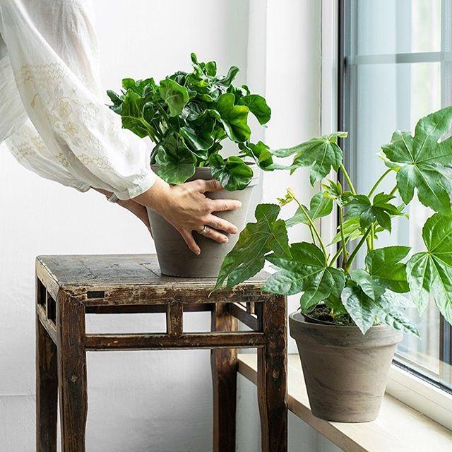 Få planter som passer deg og din hverdag. En grønn oase innendørs er trendy, og du trenger ikke grønne fingre for å få det til. Hos Hageland Kilden får du gode råd og veiledning slik at du skal lykkes med dine planter.